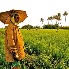 """""""Verde, verde de Kerala"""". Kerala."""