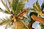 """Coconut Bear collector"". Kerala"