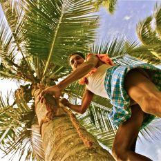"""Coconut Bear collector"". Kerala"