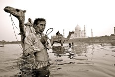 """""""Paseando a Mr. Camel"""". Agra."""